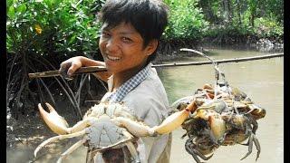 Ca Mau Vietnam  City new picture : Video bắt cua biển ở Cà Mau -Việt Nam