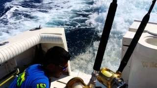Sea Lion Chases Speeding Boat In Order To Collect His Toll