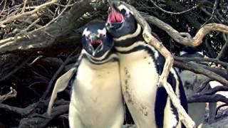 Иногда людям удается заснять потрясающие видео о дикой природе. Порой, это удается сделать даже обычным людям. Мы собрали 7 свежих видео о дикой природе, которые вам стоит посмотреть.Наш паблик ВК: https://vk.com/crazy_mad_world