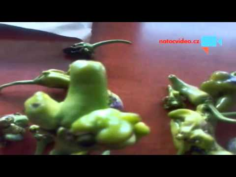 Mutanti papriky