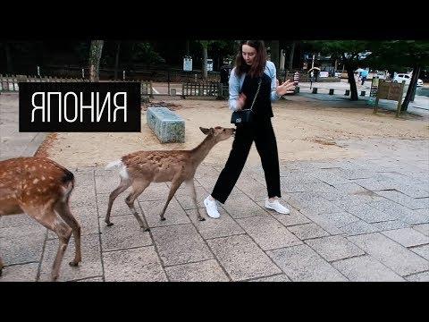 Японские олени кусаются Влог Ежедневный - DomaVideo.Ru