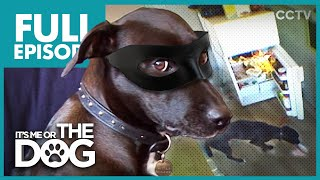 Video The Dog Burglar: Lucy | Full Episode | It's Me or the Dog MP3, 3GP, MP4, WEBM, AVI, FLV Juli 2019