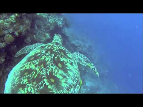 Freediving Planet  – Peaceful Fun freedive in Moalboal