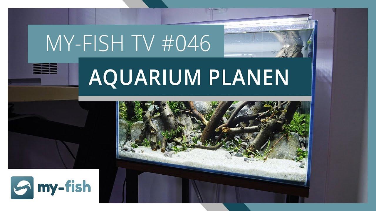 my-fish TV - Deine Nr. 1 Anlaufstelle für alle Themen rund um die Aquaristik 18