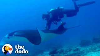 Manta Ray Waits Patiently While Divers Cut Off Fishing Line | The Dodo by The Dodo