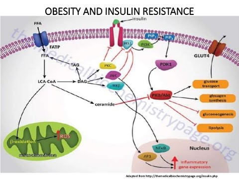 High Carb Diets & Insulin-Resistance