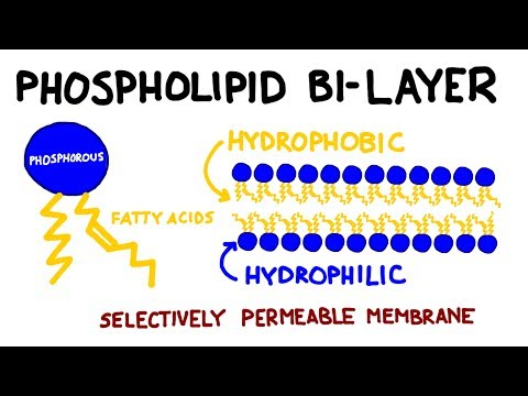 Carbohydrates and Lipids: Key Biomolecules I