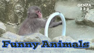 Mischievous Monkey:Funny Animals