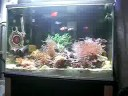 海水魚、イソギンチャク、サンゴ sea fish, sea anemone,coral