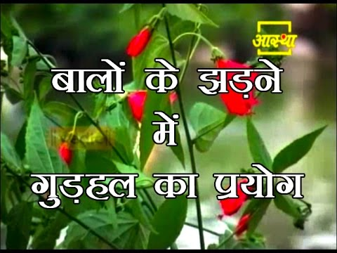 Hibiscus use in hair loss | Acharya Balkrishna