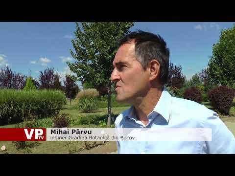 Noi proiecte pentru Grădina Botanică din Bucov