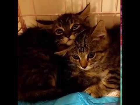 da-felini-selvatici-terrorizzati-a-gattini-coccoloni