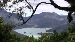 Marlborough Sounds New Zealand  City new picture : New Zealand Marlborough Sounds