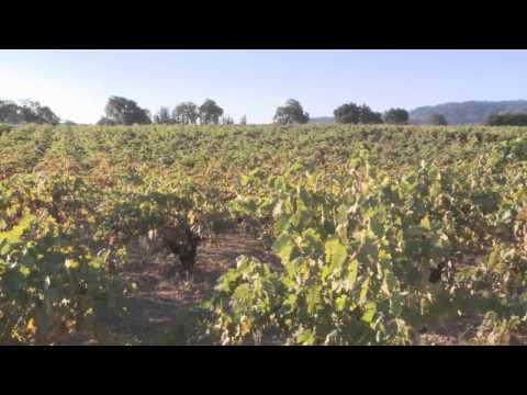 Teldeschi Vineyard - Ravenswood Winery