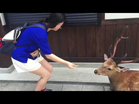 這野鹿在吃下女孩餵食的仙貝後做出「超有禮貌的反應」,真的不論重播看幾次都覺得超萌的!