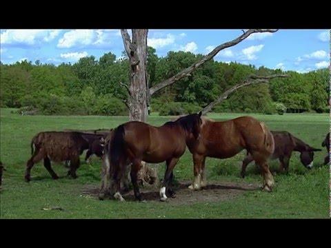 Animal Adoption (2015) full documentary