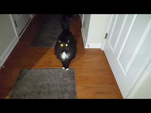 Cat Meowing Loud At A Door