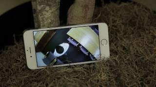 video thumbnail WiFi LED Bulb CCTV youtube