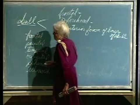 Integrative Biology 131 - Lecture 03: Skeletal System
