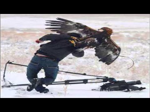 Top 7 Best Eagle Attacks (GRIZZLY,KANGAROO...& MAN) HD