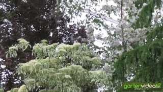 #1260 Chelsea 2013 - Der Pflanzendschungel von Hiller Nursery