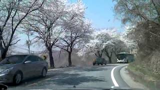 Jecheon-si South Korea  city photos : Korean cherry blossoms