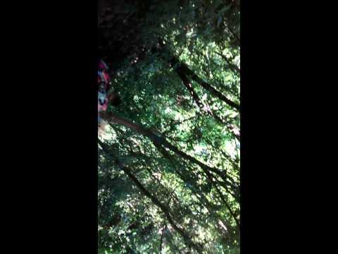 Tadashi CB300 - Descendo a trilha Cassia dos Coqueiros Cachoeira Itambé pt1