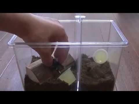 【簡単クワガタの飼育方法】~環境作り編~