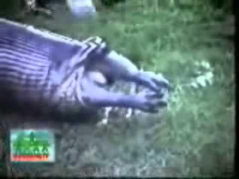 video-onlayn-glotayut