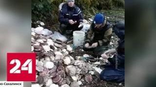 Подарок циклона: на побережье Сахалина выбросило тонны деликатесного гребешка - Россия 24