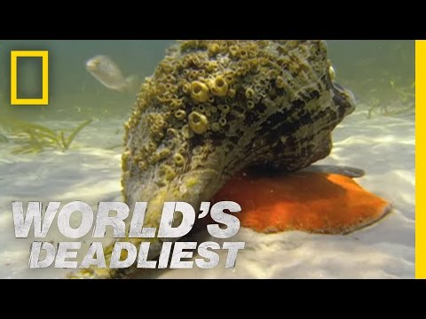 Crab - World's Deadliest: Animal Battles : FRI NOV 2 at 8P et/pt : http://animals.nationalgeographic.com/animals The 11-pound horse conch might seem invincible agai...