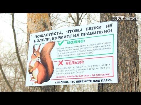 В парке им. Юрия Гагарина появились белки. Октябрьский 2018 - DomaVideo.Ru