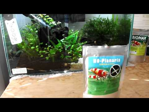 Removing Planaria from your Planted Aquarium