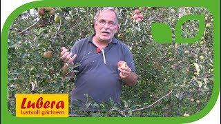 Wichtigste Kulturtips für Frühäpfel