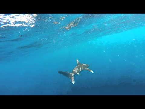 Elphinstone Reef by Huub Bredero