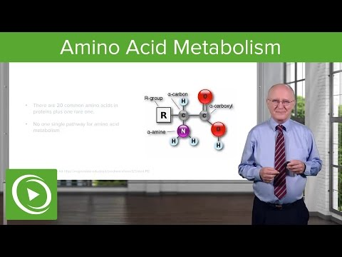 Amino Acid Metabolism: Introduction – Biochemistry   Lecturio