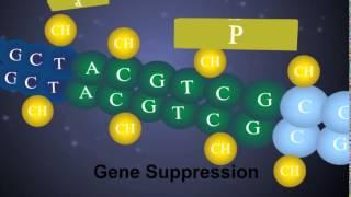 DNA Methylation & Decitabine