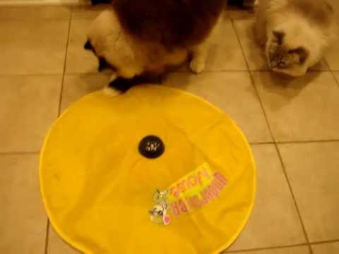 0 Undercover Mouse Electronic Cat Toy Review