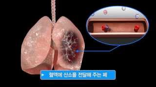 폐   미리보기