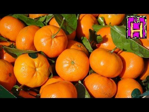 benefici, proprietà e controindicazioni dell'arancia