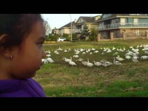 Pequeña y confundida observadora de aves