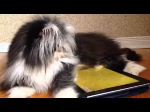 Il gatto Atchoum caccia il topo su Ipad