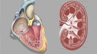 EMP Endocrinología: Sistema Renina, Angiotensina, Aldosterona