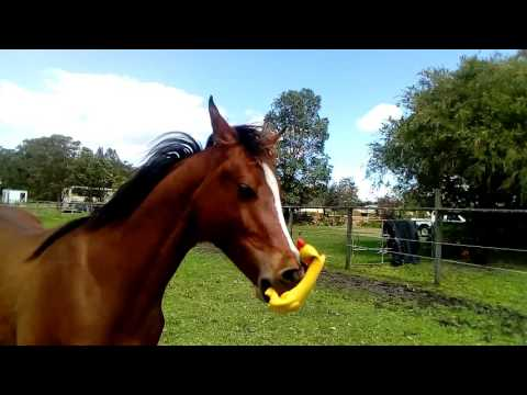 Horse Has Fun With Squeaky Rubber Chicken