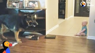 Dog And Baby Playing Hide And Seek | The Dodo by The Dodo