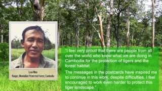 Cambodian Rangers Impressed By 1000 Postcards - Cards4Tigers 2013