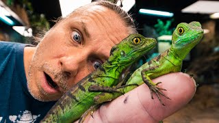 UNBOXING JESUS LIZARDS FOR MY REPTILE ZOO!!   BRIAN BARCZYK by Brian Barczyk