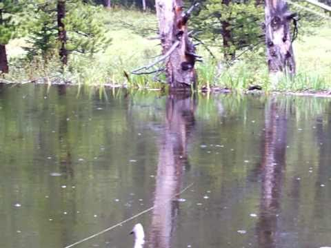 Swan Creek Beaver Pond Brookies