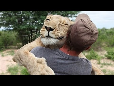 Удивительные истории о дружбе людей и животных (видео)