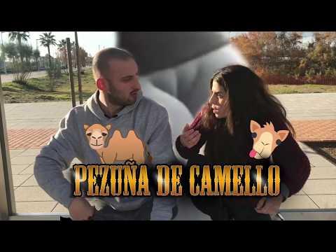 PEZUÑA DE CAMELLO
